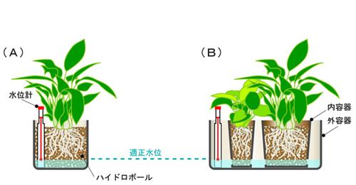 カルチャー ハイドロ ハイドロカルチャーに植え替えよう!相性のいい観葉植物はどれ?|🍀GreenSnap(グリーンスナップ)